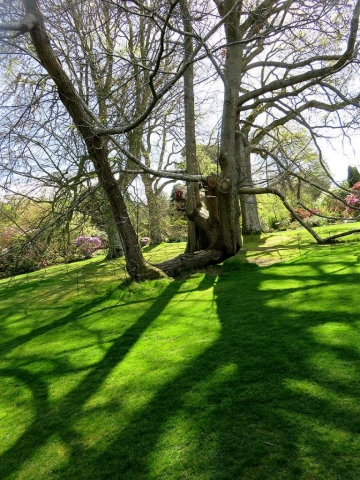 Trees and their shadows at Bodnant Garden