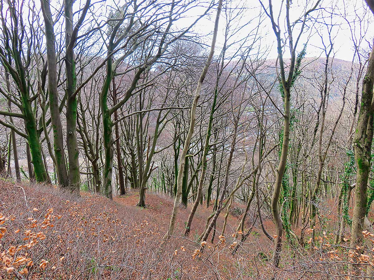 Bare trees above Castell Coch