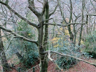 Walk in the woods at Castell Coch