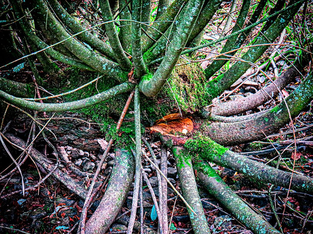 Tree stump and sprouts.