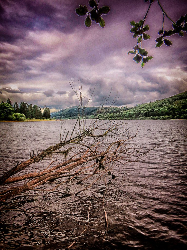 Fallen tree on the banks of the reservoir.