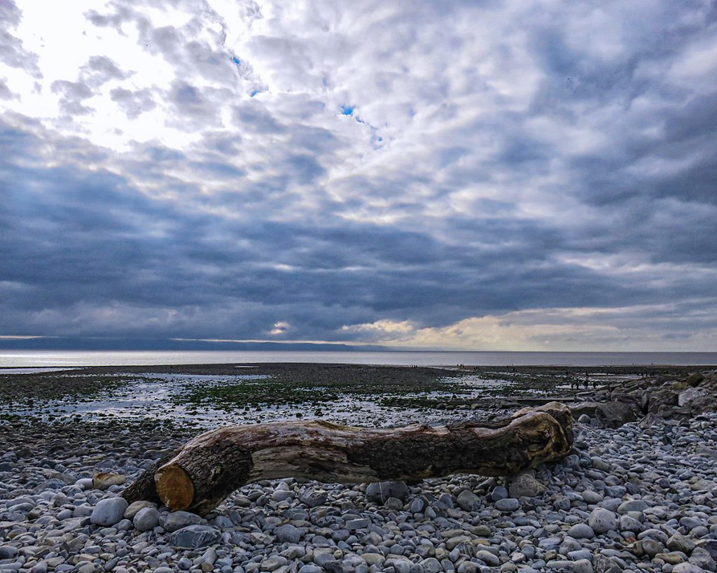 Driftwood and sky.