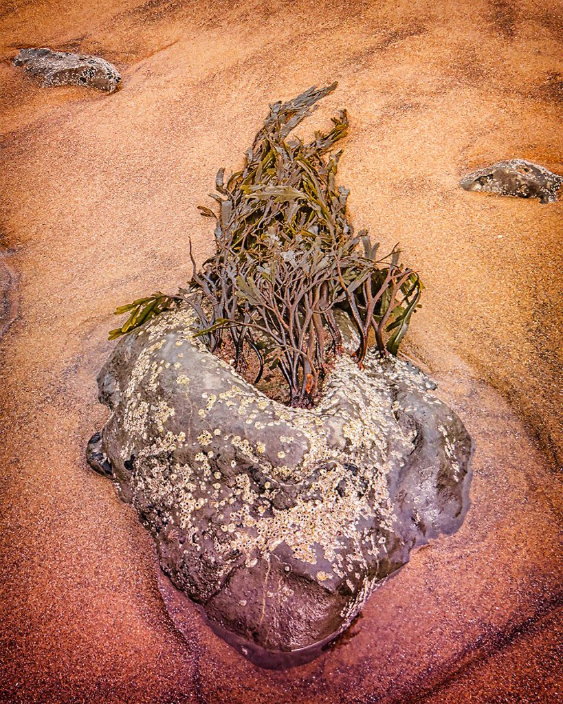 Rock and seaweed at low tide.