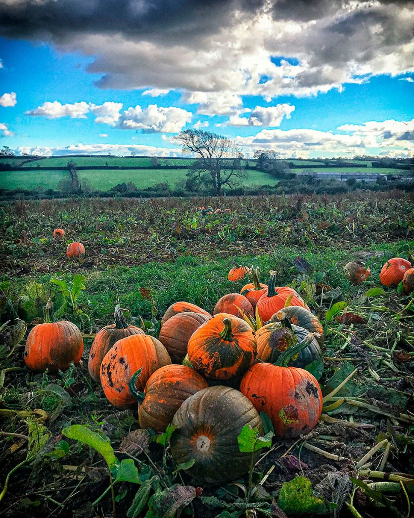 Pumpkins and fields.