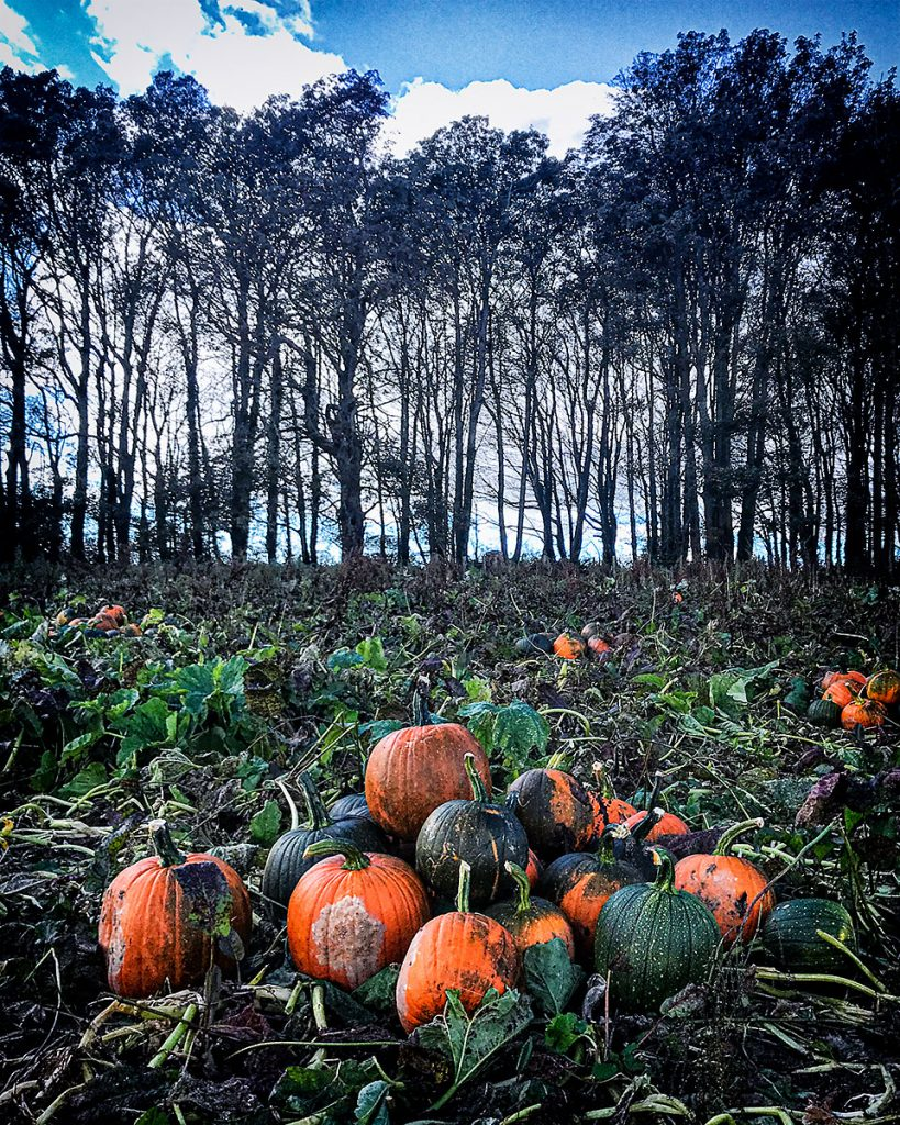 Pumpkins and trees 4.