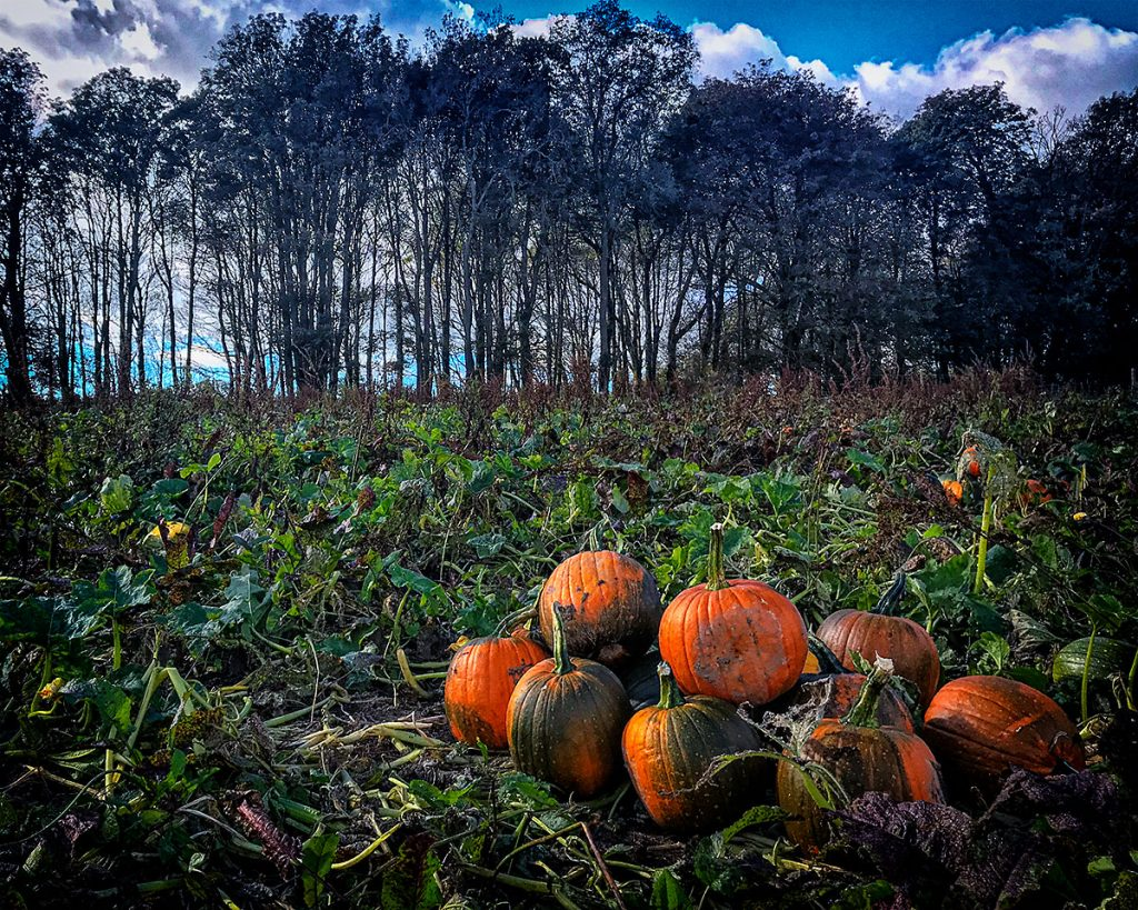 Pumpkins and trees 3.
