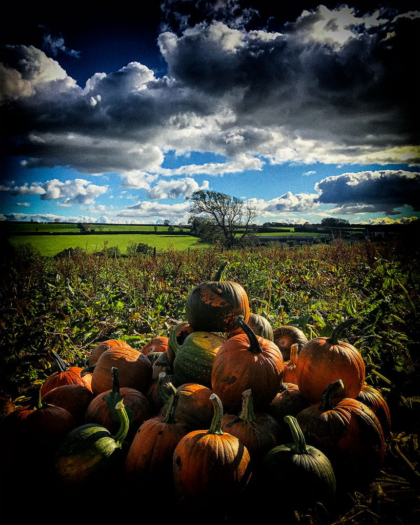 Pumpkins and view.