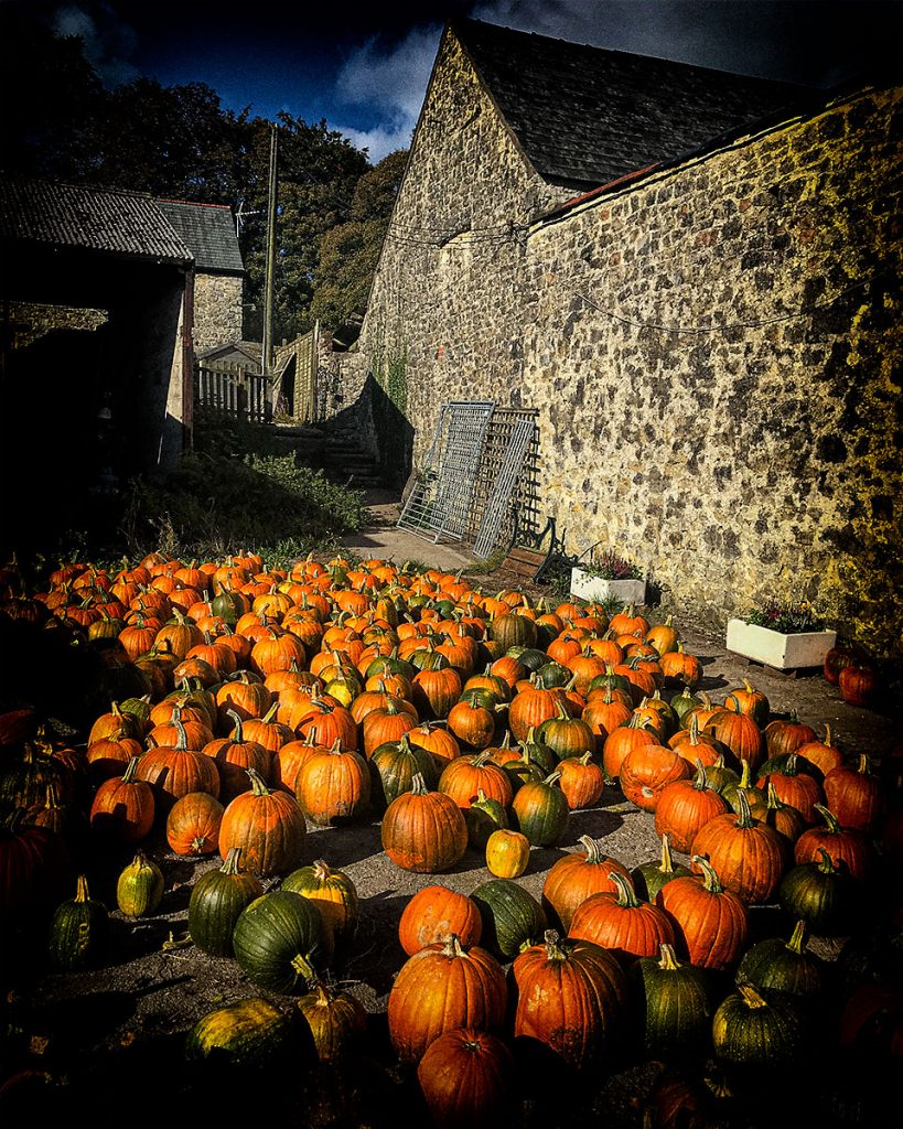 Pumpkins at Cowbridge Farm Shop.