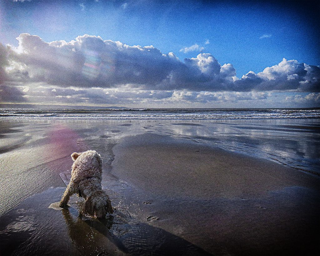 Rosie enjoying the beach.